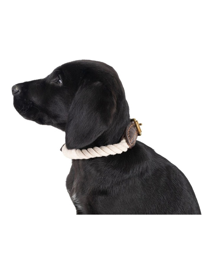 Genuine Leather & Brass Rope Collar Natural Large image 3