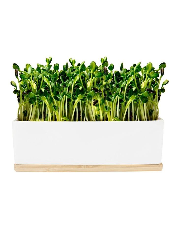 Mini Garden Sprouts Kit - Kale image 2