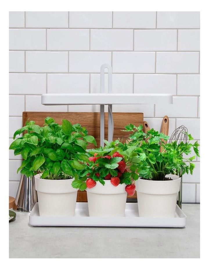 Indoor Garden image 2