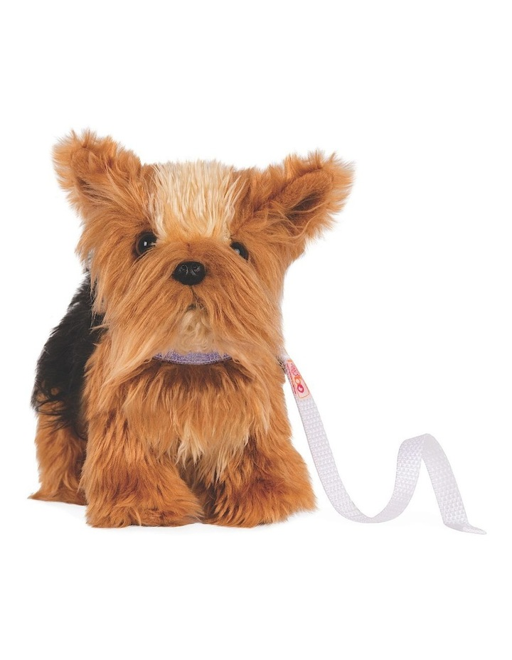 Yorkshire Terrier Pup image 1