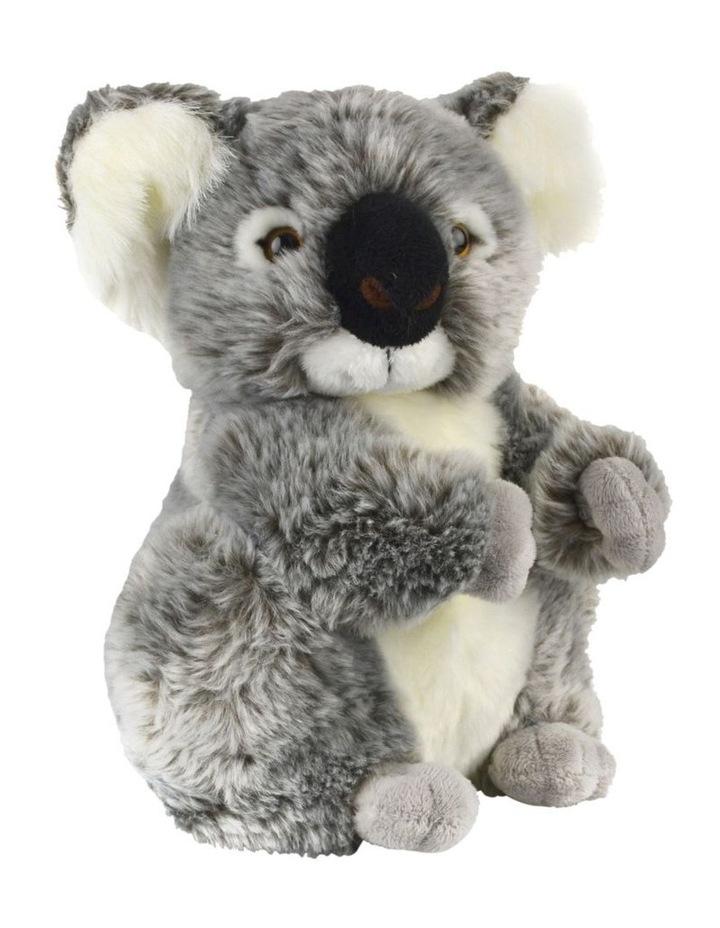 Koala Kalypso image 1