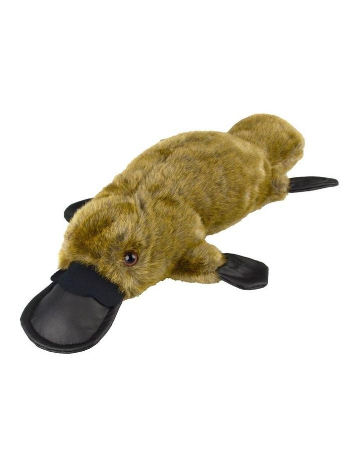 Platypus image 1