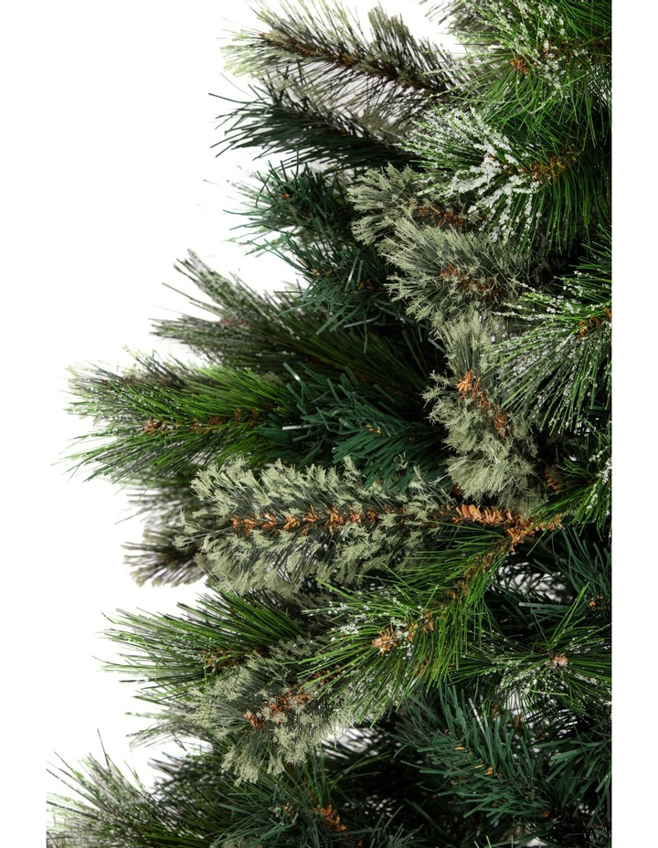 Oregon Pine Tree: 180-210cm image 2 - Vue Oregon Pine Tree: 180-210cm MYER