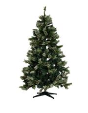 Oregon Pine Tree