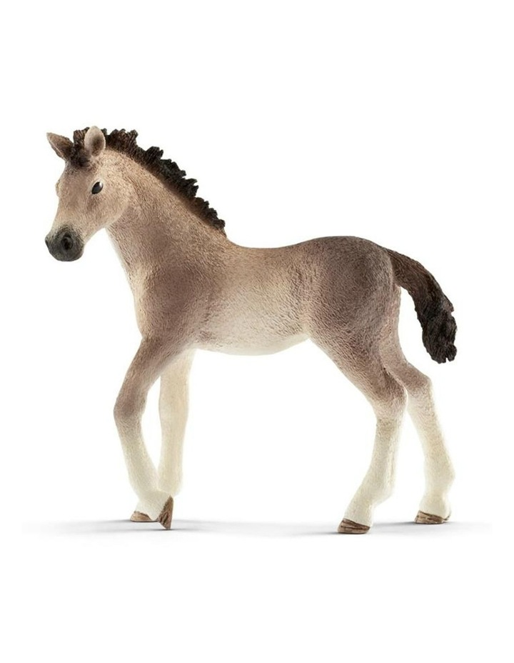Andalusian Foal image 1