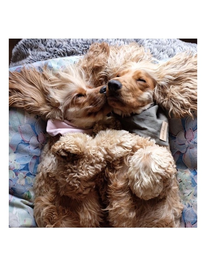 Succulent Medley  MEDIUM Dog Bed image 5