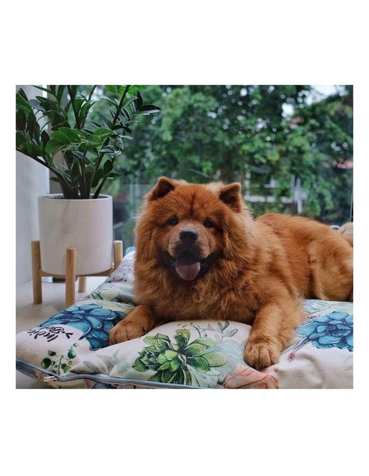 Succulent Medley  LARGE Dog Bed image 4