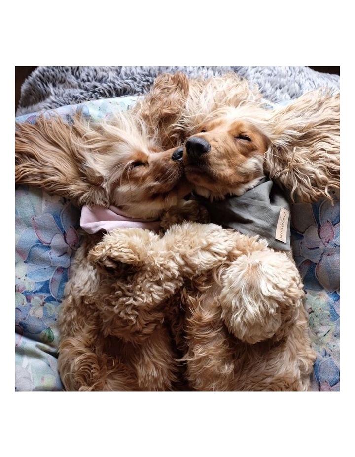 Succulent Medley  LARGE Dog Bed image 5