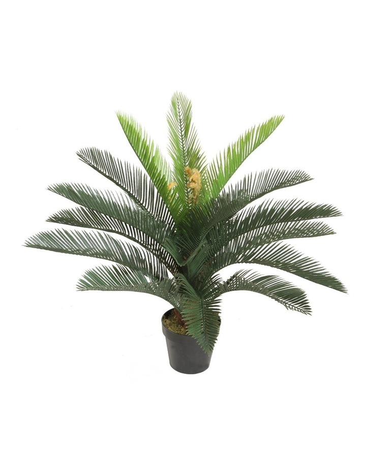 75cm Tall Potted Cycas image 1