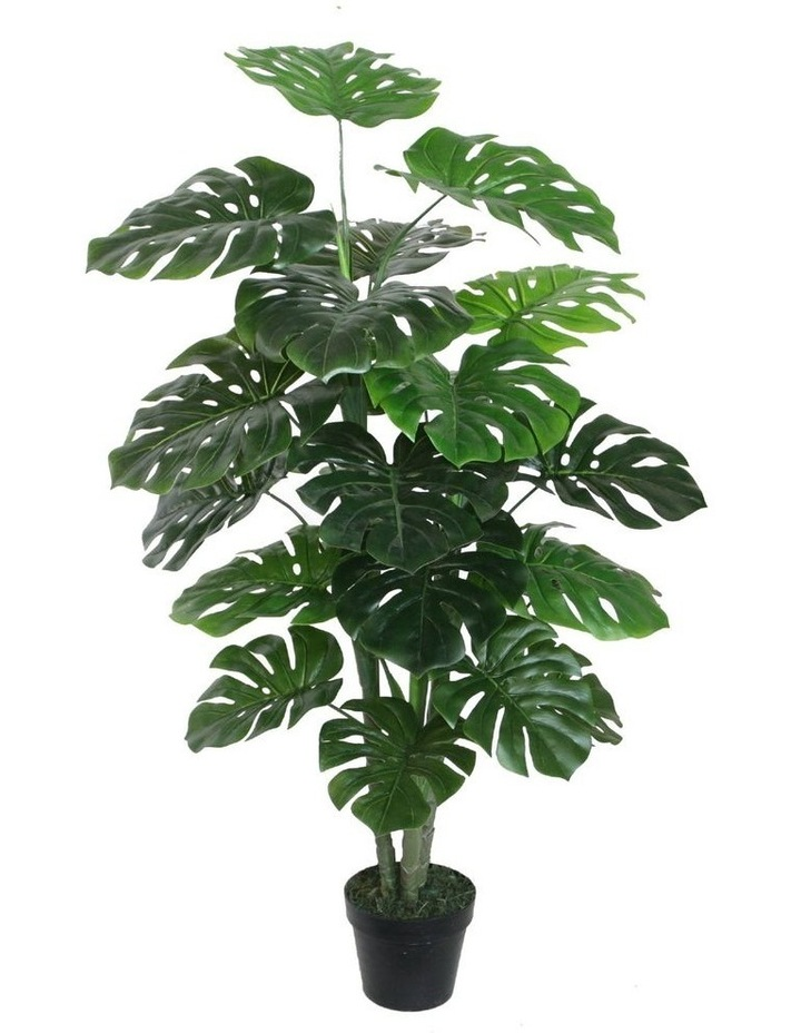 120cm Tall Potted Monstera image 1