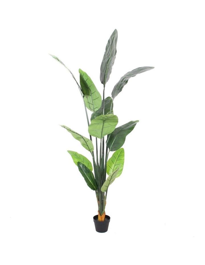 Botanica 180cm Artificial Banana Leaf Tree Plant image 1