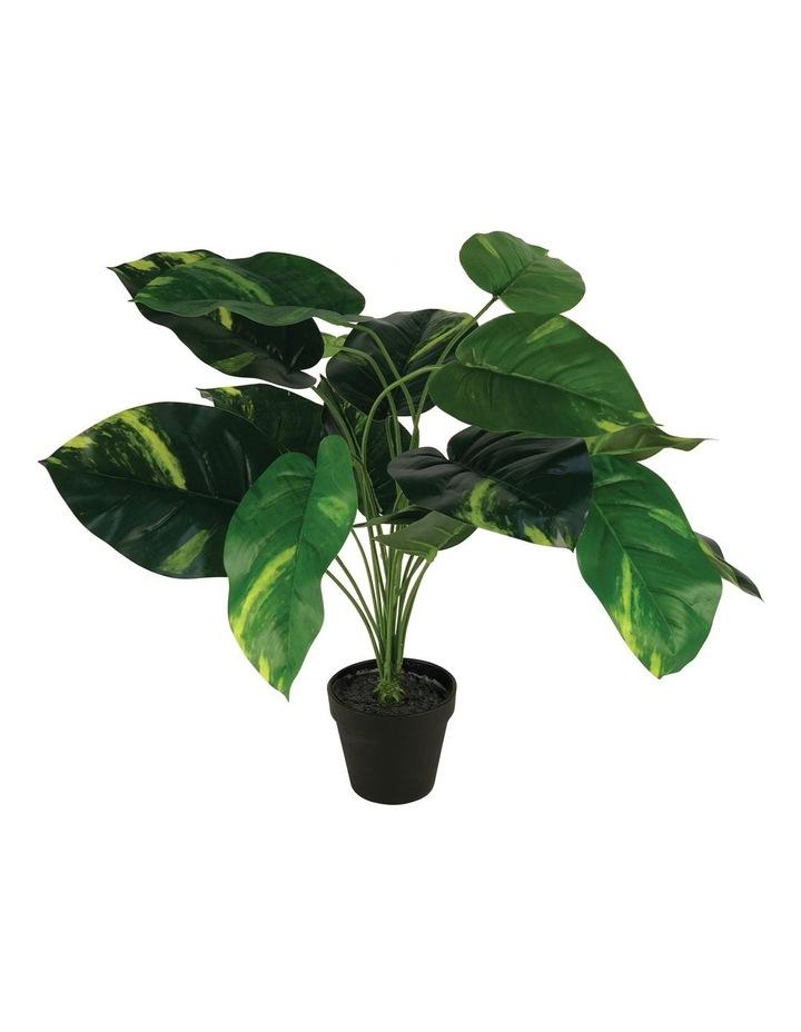 55Cm Artificial Golden Pothis Plant image 1