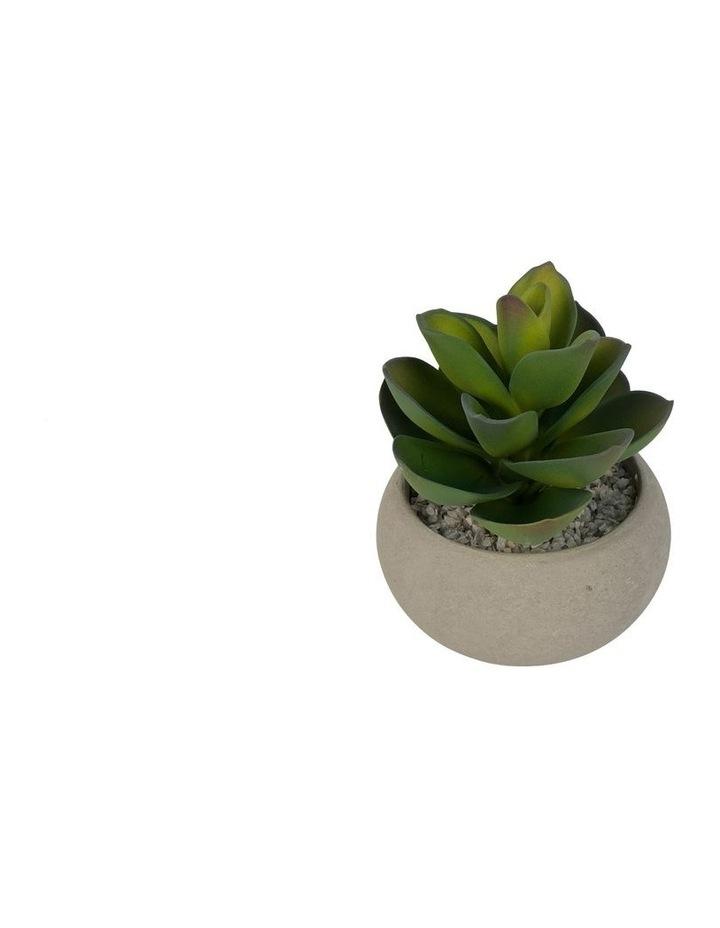 Artificial Succulent Concrete Pot image 1