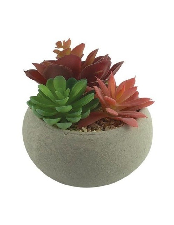 Artificial Succulent Garden Con Pot image 1