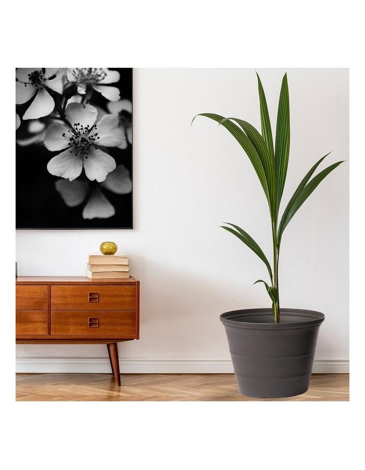 24Cm Camellia Rang Pot Planter Set Of 4 image 5