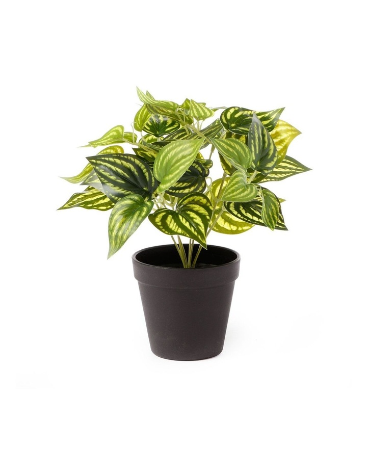 Artificial 28cm Water Leaf Potted Plant image 1