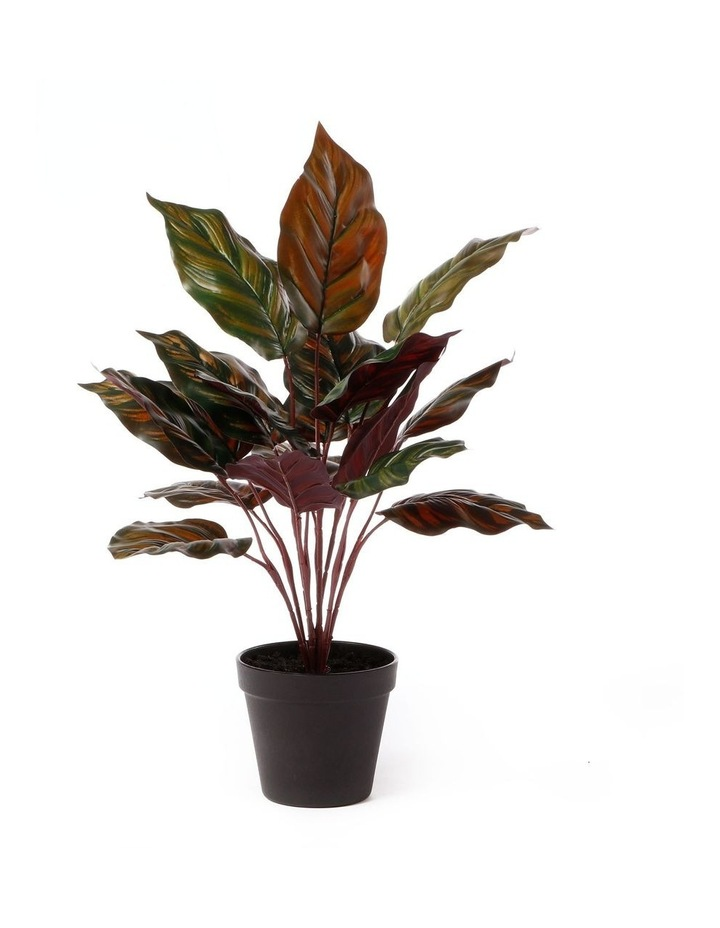 Artificial 47cm Peaccock Leaf Potted Plant image 1