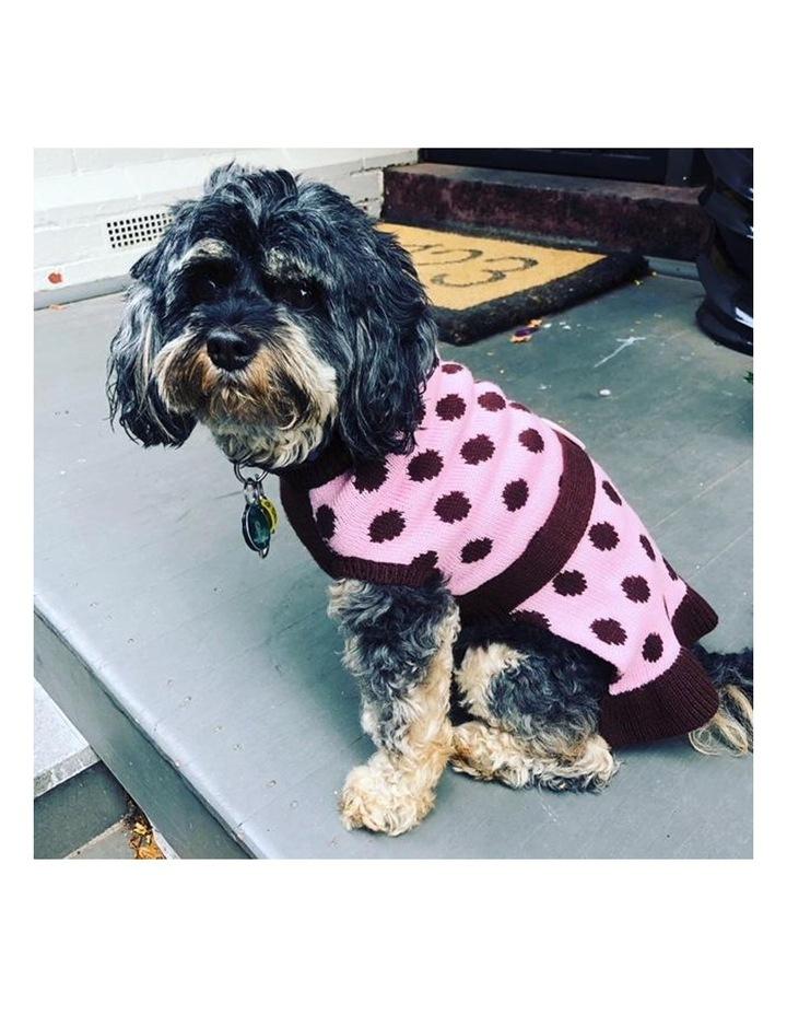 Sassy Girl Dog Sweater LARGE image 5