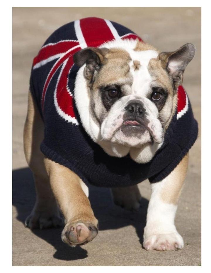 Union Jack Dog Sweater MEDIUM image 3