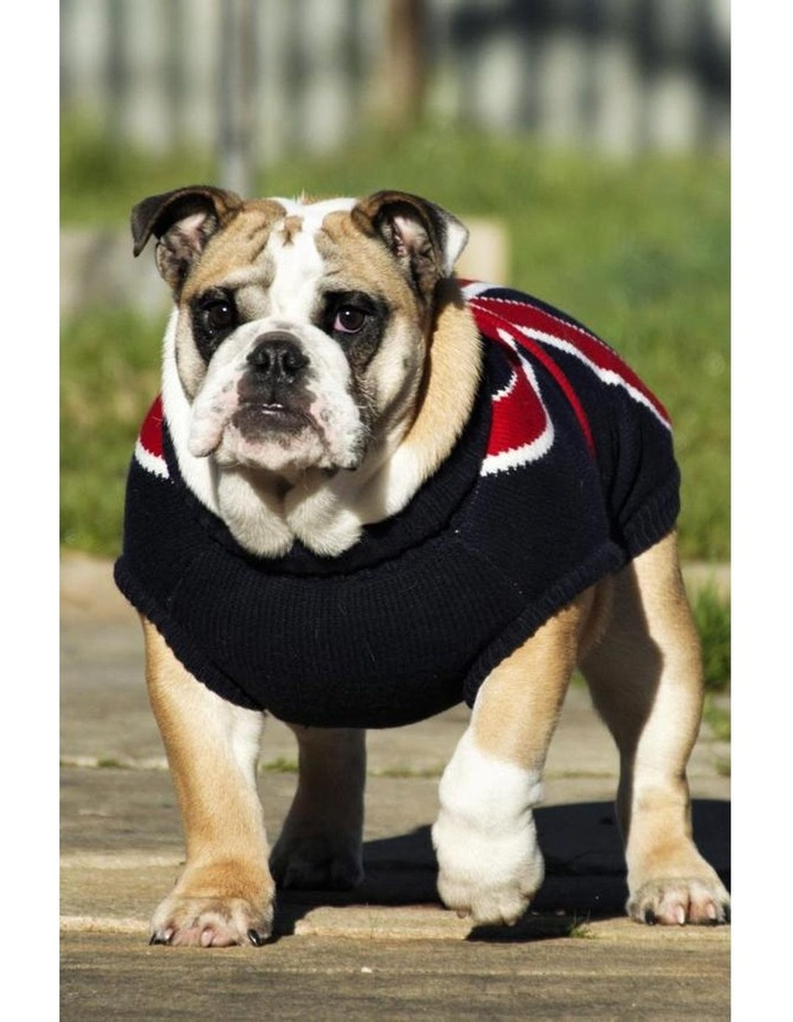 Union Jack Dog Sweater MEDIUM image 4