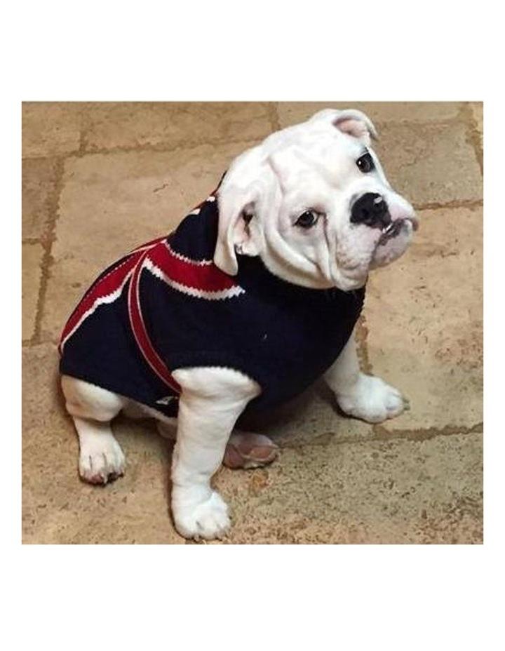 Union Jack Dog Sweater MEDIUM image 5