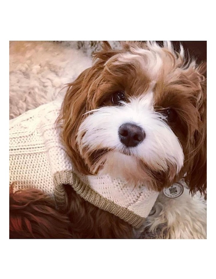 Whitehall Dog Sweater MEDIUM image 2