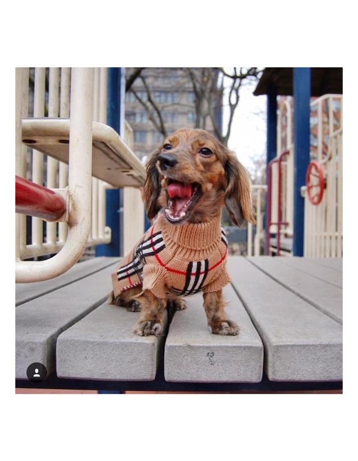 Knightsbridge Dog Sweater - Beige image 3