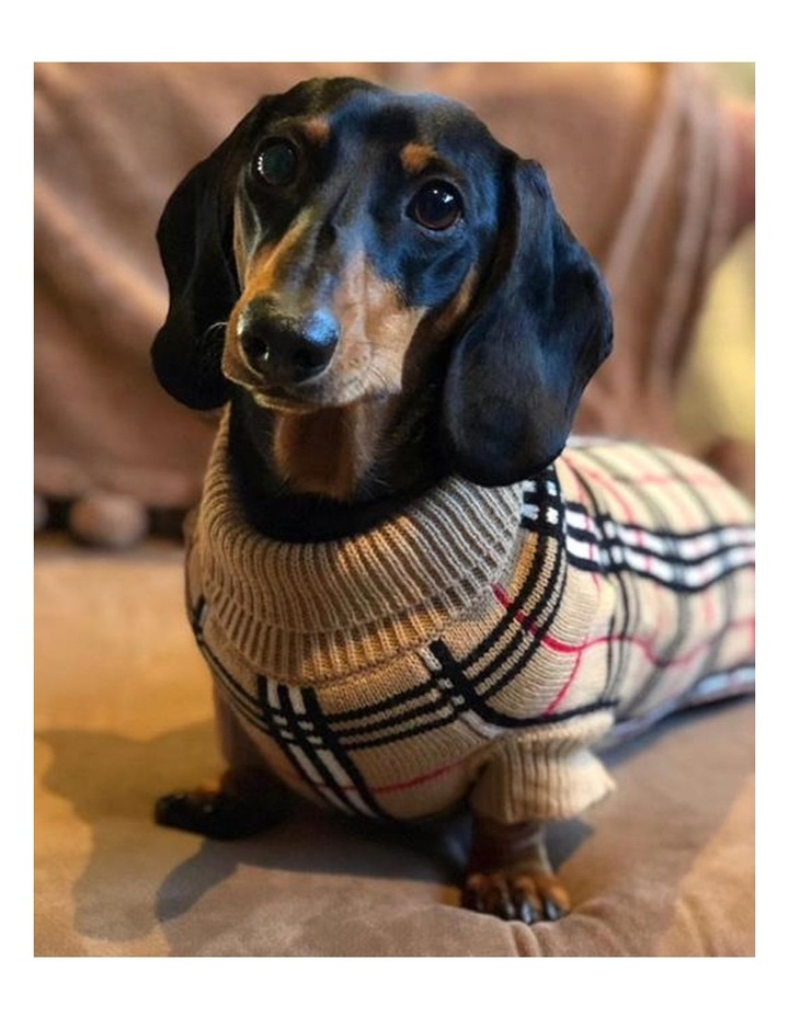 Knightsbridge Dog Sweater - Beige image 7