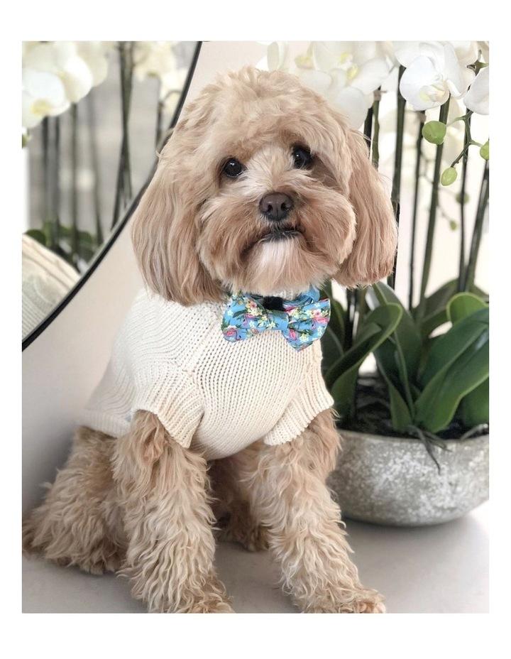 Brighton Dog Sweater - Cream MEDIUM image 2
