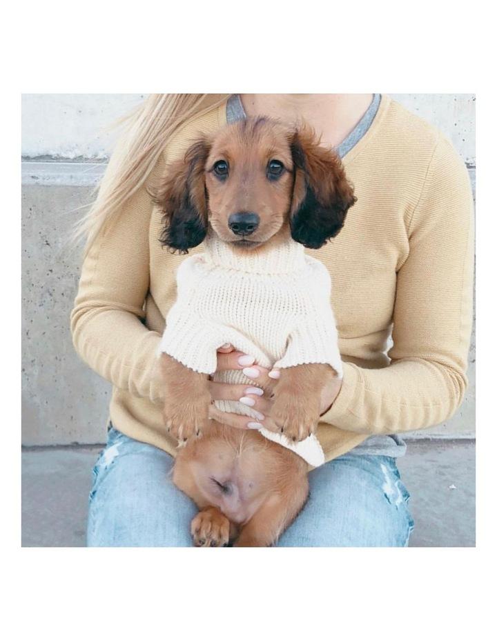 Brighton Dog Sweater - Cream MEDIUM image 3