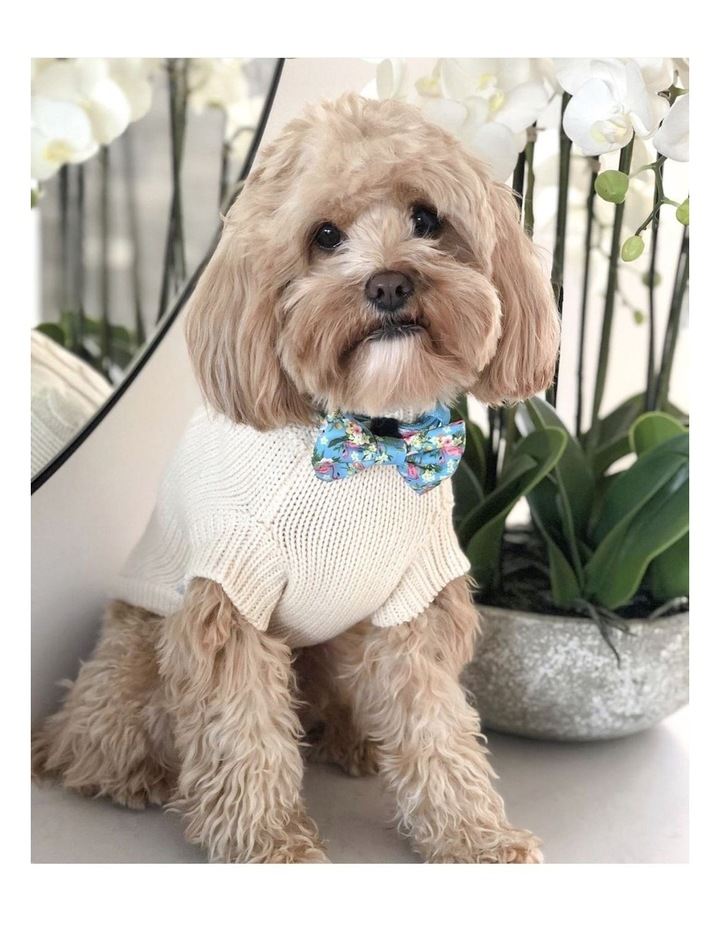Brighton Dog Sweater - Cream LARGE image 2