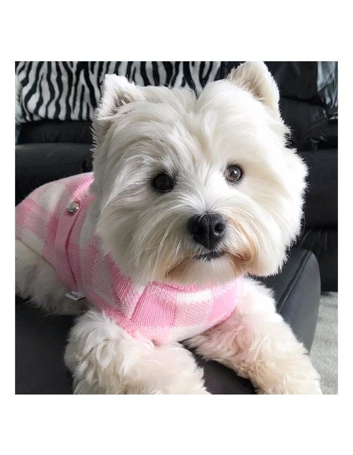 Boston Dog Sweater - Pink image 2