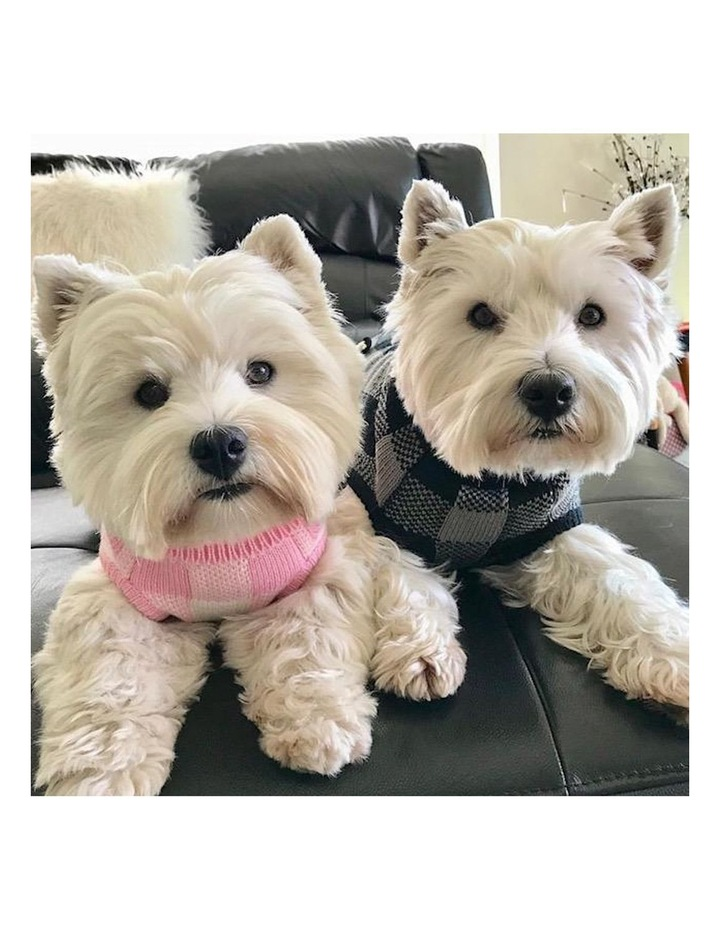 Boston Dog Sweater - Pink image 4