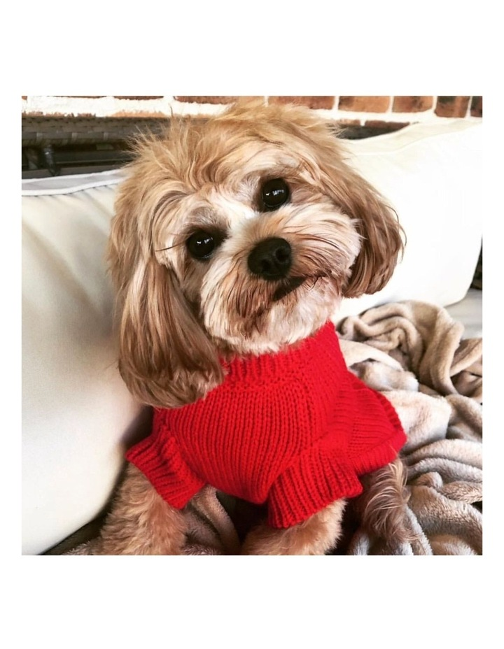 Brighton Dog Sweater - Red XL image 2