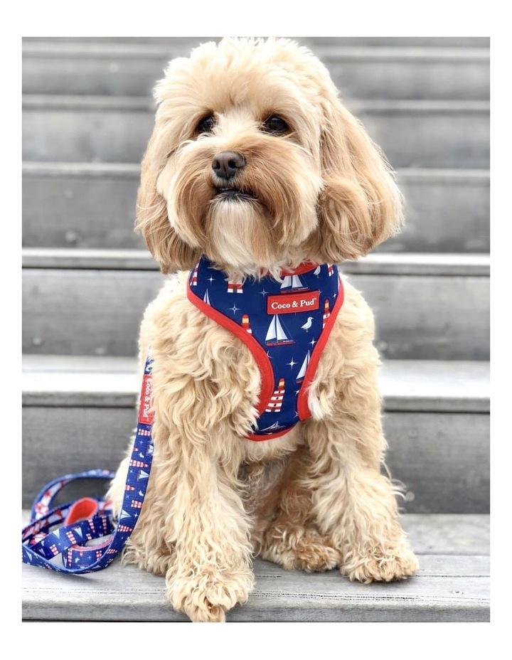 Hamptons Reversible Dog lead/ Leash image 4