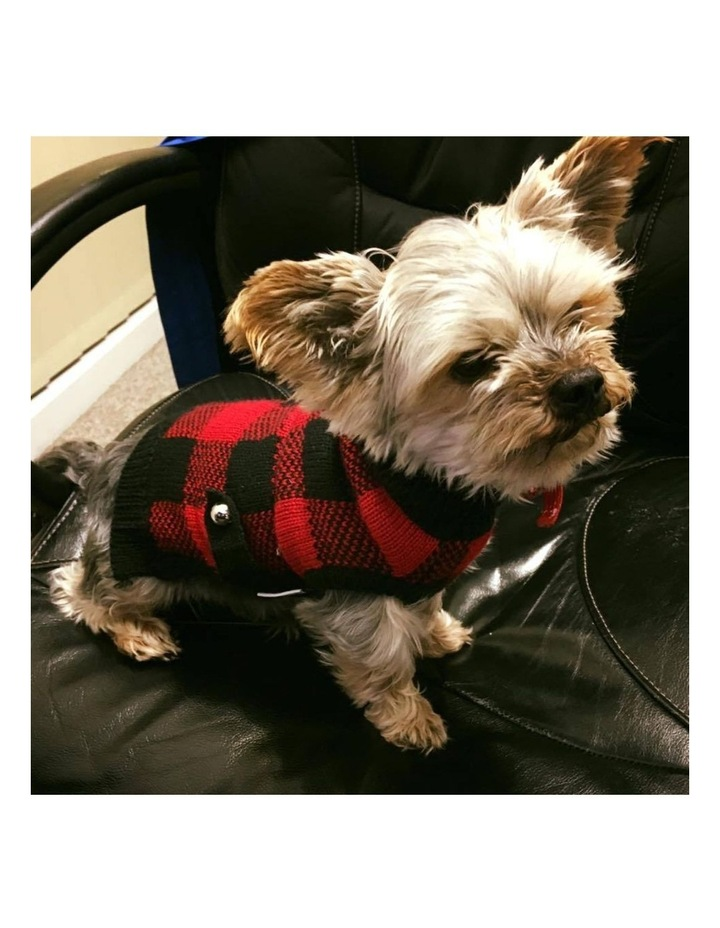 Boston Dog Sweater - Red/ Black image 2