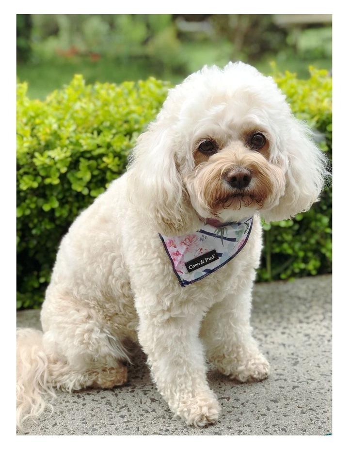 Coco & Pud Floral Blooms Cotton Dog Bandana image 2