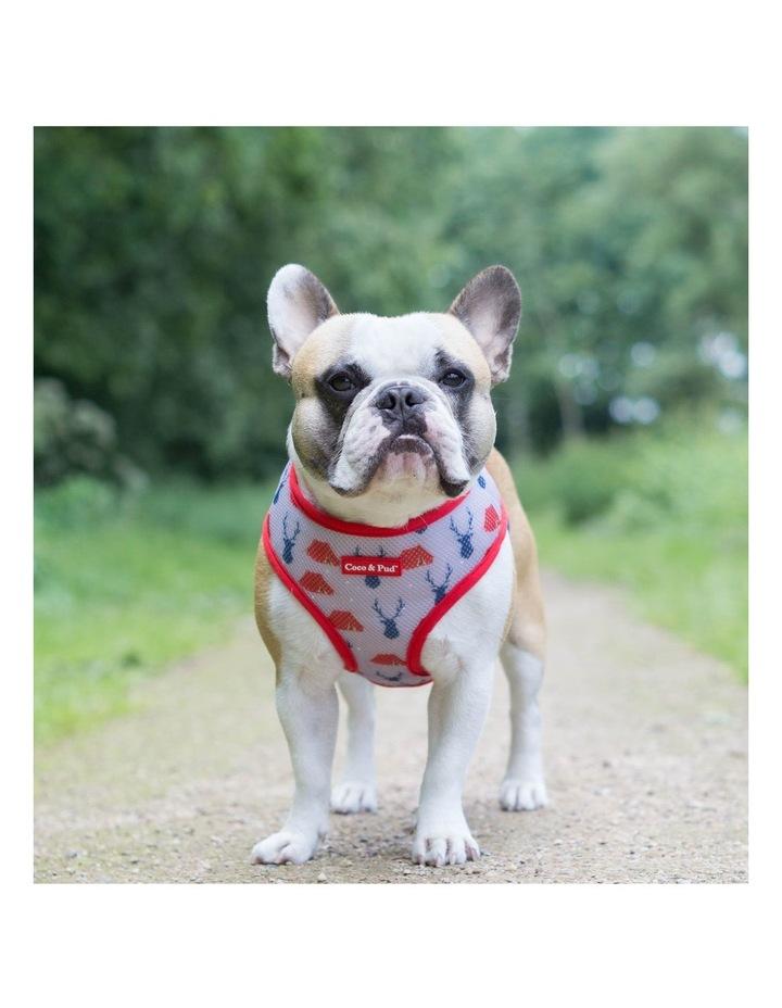 Adventure Reversible Dog Harness image 5