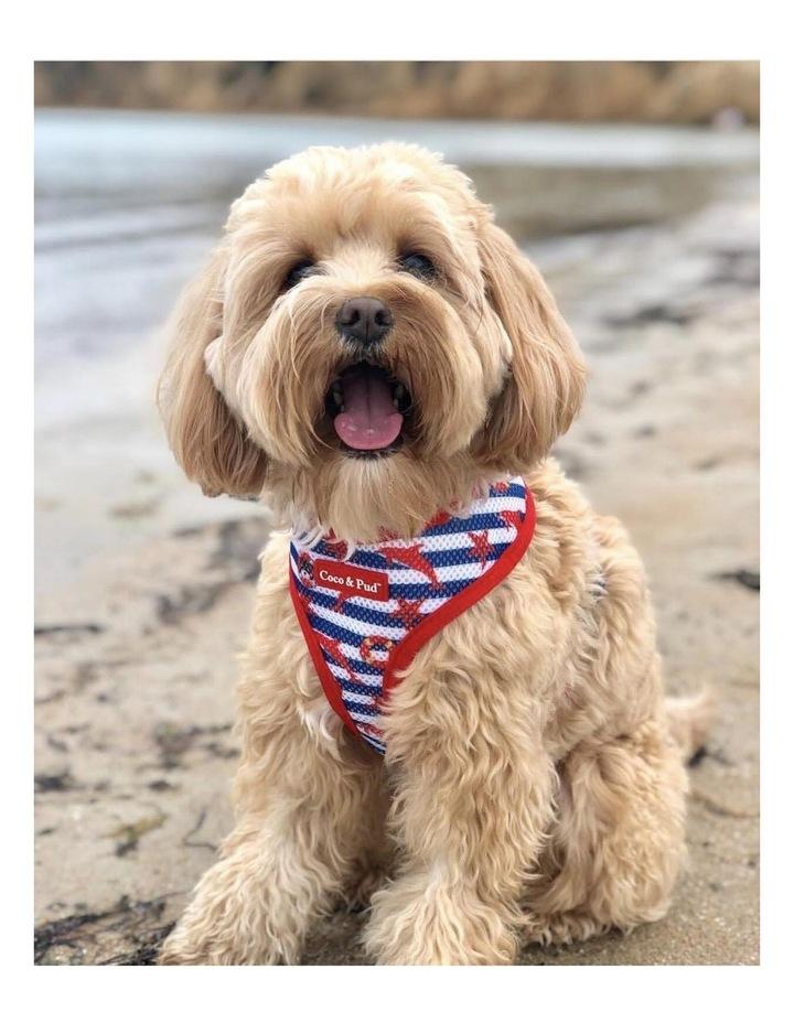 Hamptons Reversible Dog lead/ Leash image 7