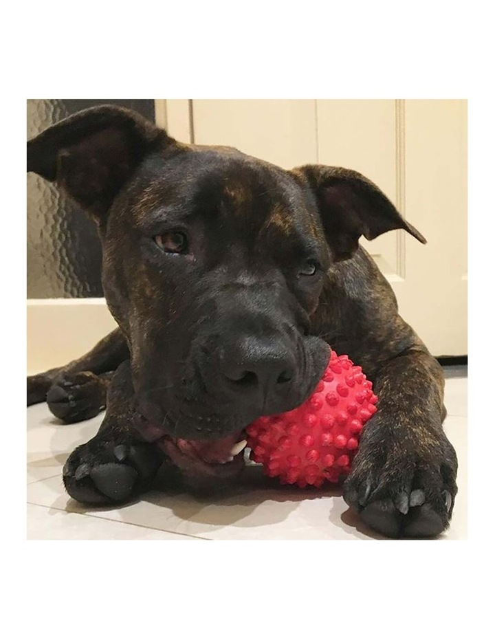 Catch Spike Ball Throw/Fetch Tough Hard Floating Toy for Dogs Red 9cm image 3